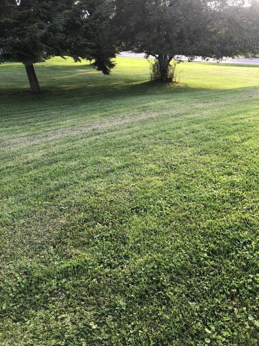 lawn 7.2018